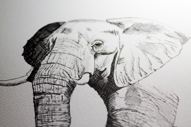 eleph2